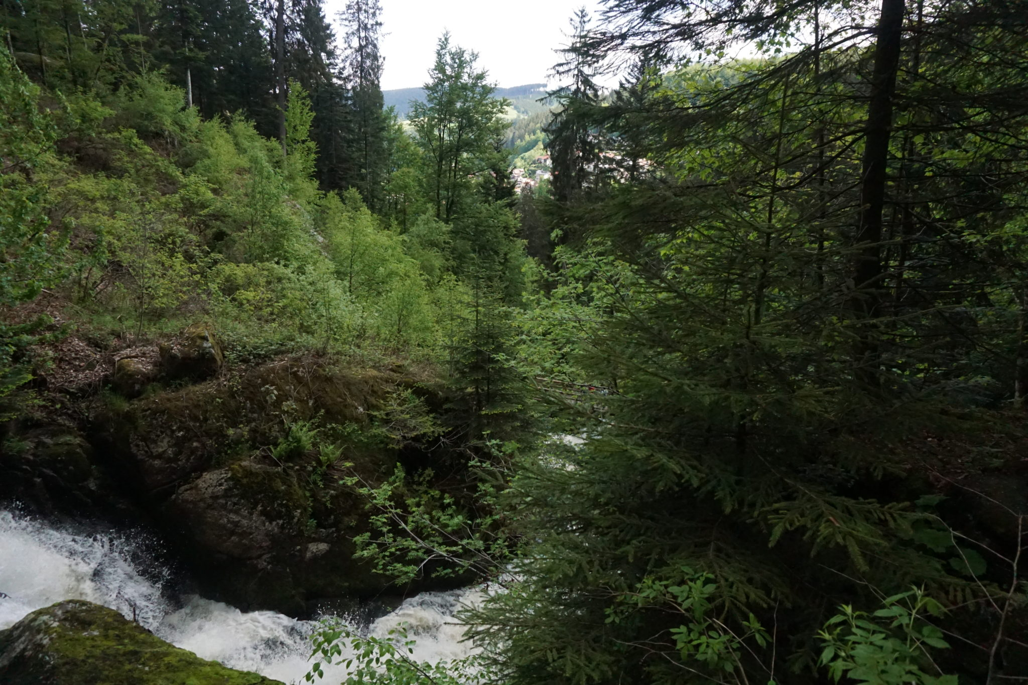 roadtrip duitsland, zwarte woud, schwarzwald, duitsland
