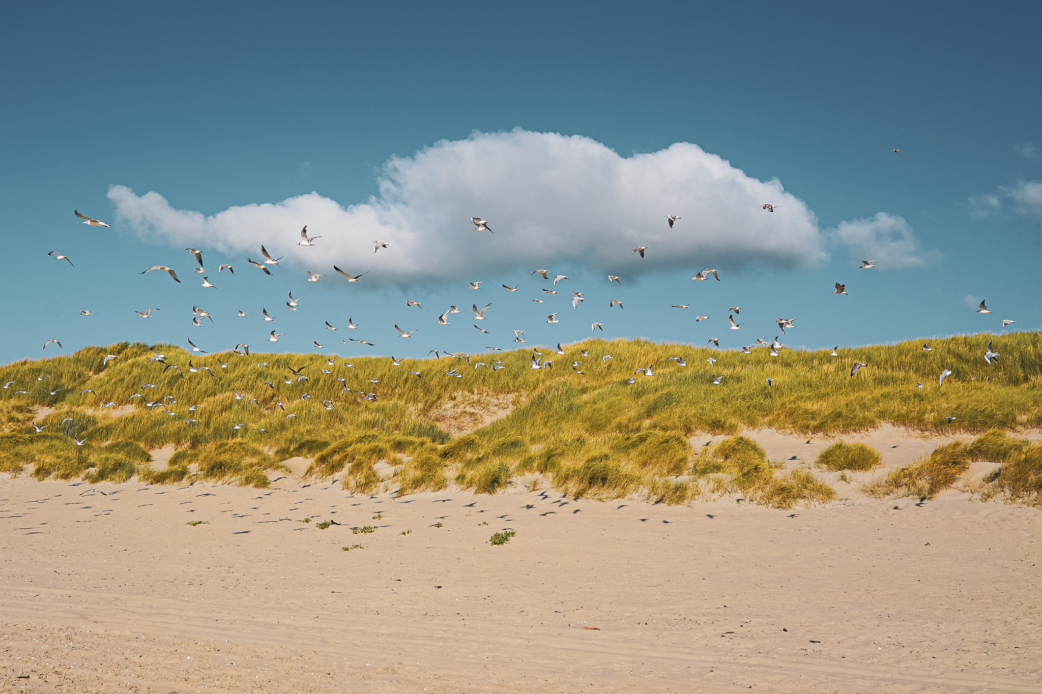 Vogelexcursie op Texel - atravel note