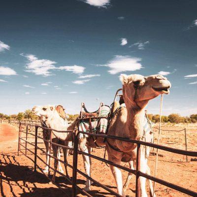 wat je moet weten voor je vertrekt naar australie - a travelnote